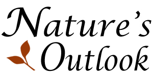 Nature's Outlook Landscaping Company in Kingwood, Texas